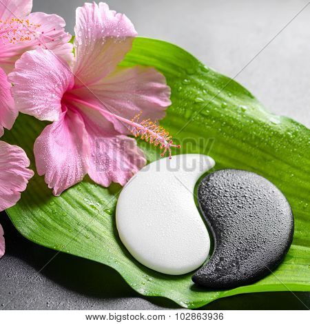 Beautiful Spa Concept Of Pink Hibiscus Flowers And Yin-yang Of Stone Texture On Big Green Leaf With