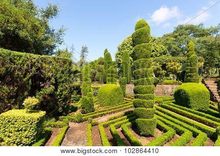Exquisite bushes in the garden