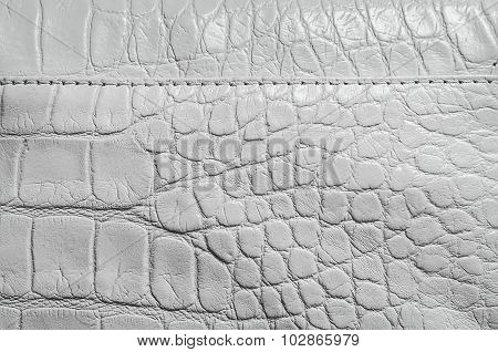 White pearl texture of reptile skin
