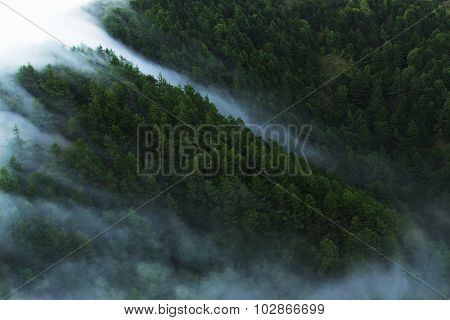 Flowing stream of fog in rifle-green forest with top view