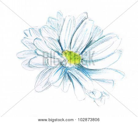 A watercolor drawing of a daisy on a white background