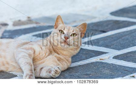 Cute cat in a Greek island