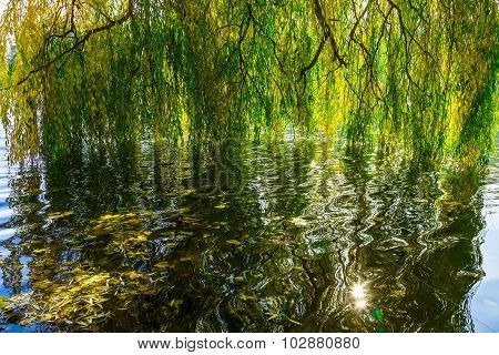 Willow Branches Over Water In Autumn