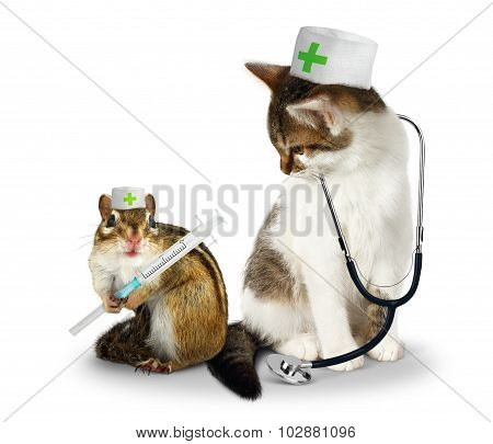 Vet Concept, Funny Doctor Chipmunk  And Cat With Phonendoscope And Syringe