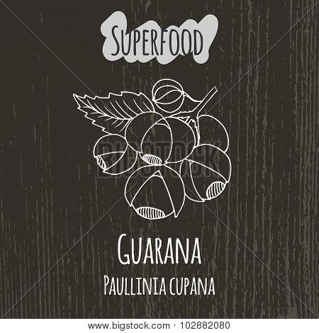 Hand drawing illustration of guarana. Paullinia cupana.