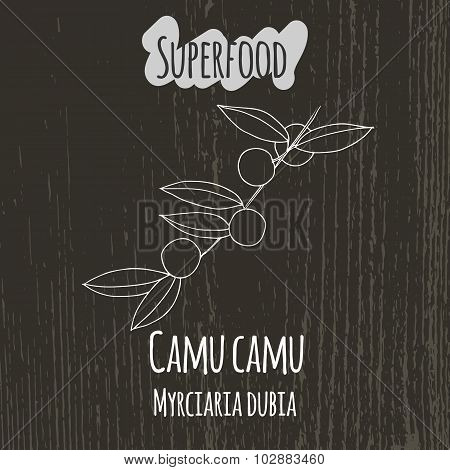 Hand drawing illustration of camu camu. Myrciaria dubia