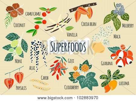 Vector hand drawn superfoods.