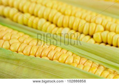 Fresh Ripe Corn Cobs, Macro