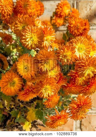 Bouquet Of Chrysanthemums On The Brick Wall Background