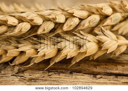 Spikelets Of Wheat On The Old Wooden Background. Macro, Closeup