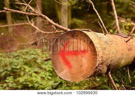 directional arrow