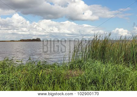 Dutch Landscape With Lake And Reed Vegetation