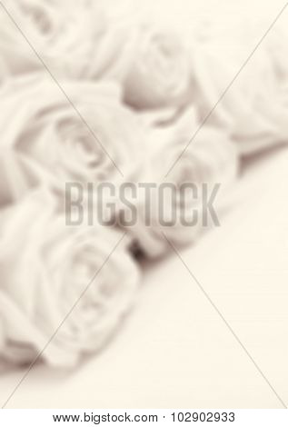 Beautiful White Roses Toned In Sepia  In Blur Style As Wedding Background. Soft Focus. Retro Style