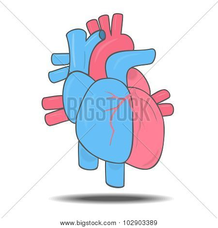 Human Heart And Blood Vessels Isolated Illustration