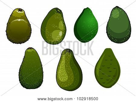 Dark green isolated avocado fruits