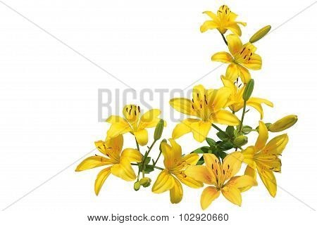 Yellow Lily Bundle