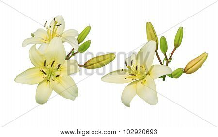 Lily Flower Cluster