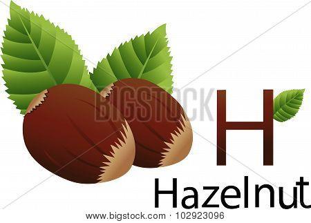 H font with hazelnut