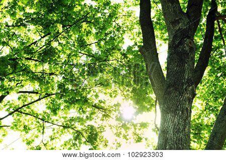 Green tree crown closeup