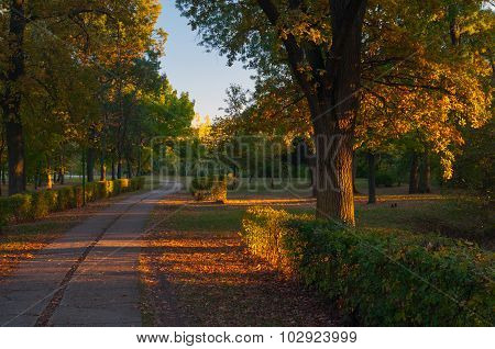 Dusk In The Colorful Park On Sunny Autumn Day