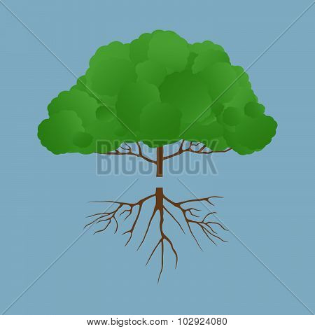Gree Tree With Root