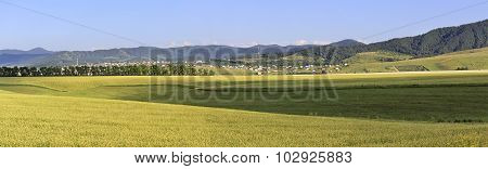 Beautiful panorama agricultural fields and the town of Belokurikha.