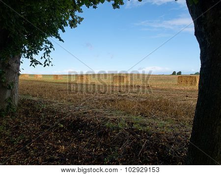 Beautiful Landscape With Straw Hay Bales Stacks
