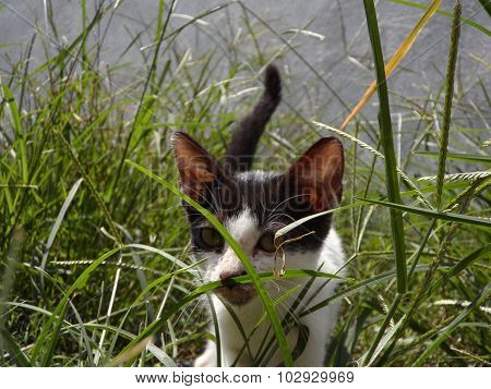 Kitten hidding in the grass