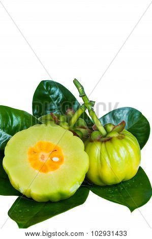 Close Up Garcinia Cambogia On Leaves. Isolated On White.