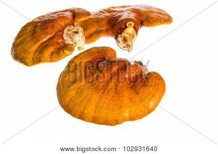 Lingzhi, Ganoderma Lucidum Isolated On White. Chinese Traditional Medicine.