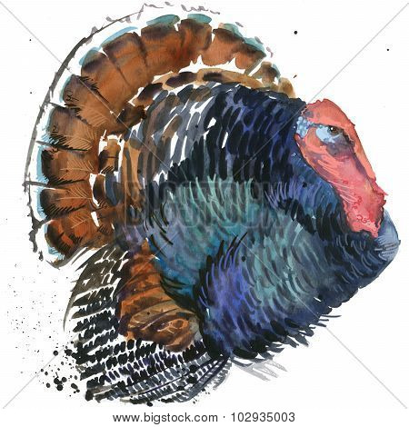 turkey graphics, turkey illustration with splash watercolor textured background. illustration waterc