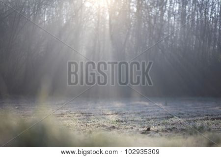 Fogy Forest