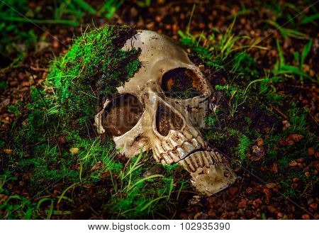 Still Life With Human Skull Abstract Concept