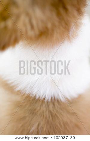 dog fur background