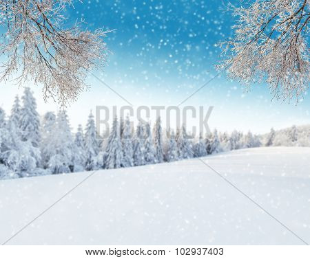 Snowy winter landscape with frozen breeze branches