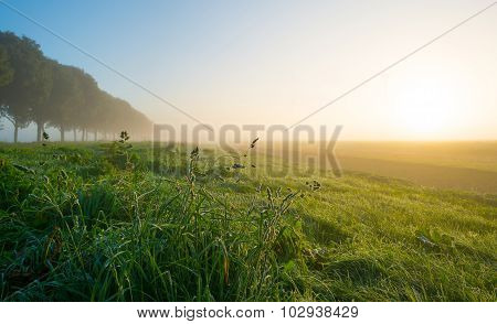 Grass on a hazy field at sunrise in autumn