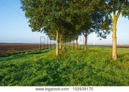 Trees along a hazy sunny field in autumn