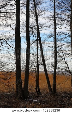 Autumn landscape with bare trees
