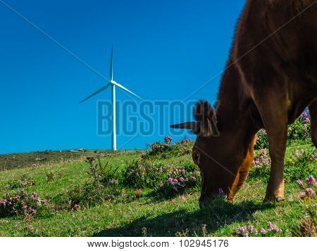 Livestock And Energy