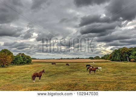 Horses Grazing On A Maryland Farm In Autumn