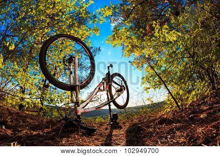 Beautiful scene of bike on sunset