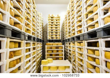 Cheese Factory Warehouse With Shelves Stacked With Cheese