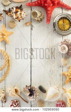 seashell  on wooden background texture