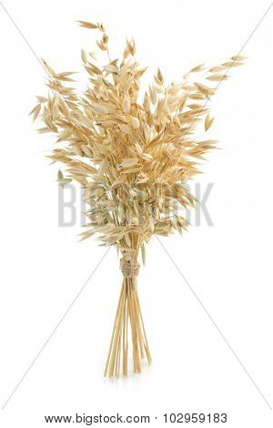 oat ears isolated on white background