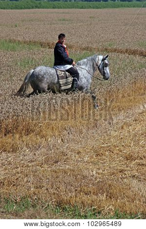 DAVOR, CROATIA - JUNE 26: Men on horseback dressed in national costume, riding through fields of wheat during wheat harvest in Davor, Slavonia, Croatia on June 26, 2010