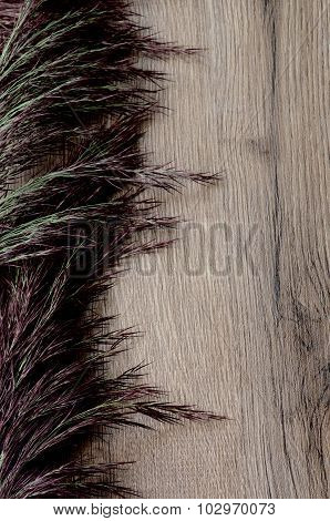 Dried Grass Panicles