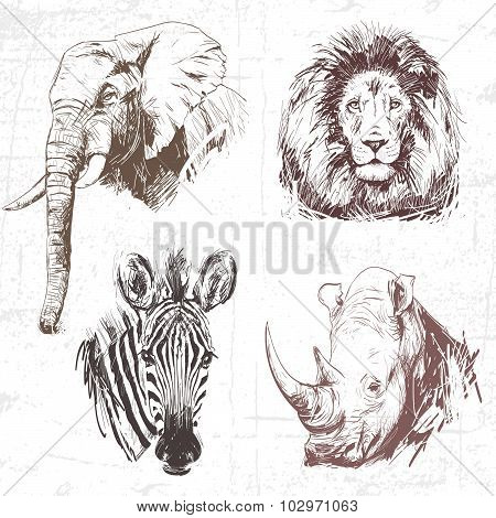 Animals Around The World (africa). Collection Of Hand Drawn Illustrations (originals, No Tracing). D