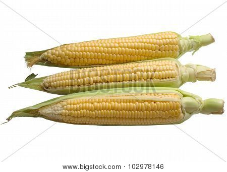 Corn isolated on a white background.
