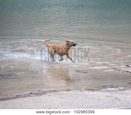 Dog Playing In The Lake