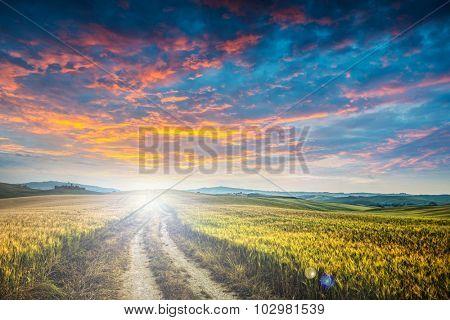 sunet over dirt road in wheaten field